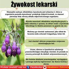 Żywokost lekarski korzyści zdrowotne - Zdrowe poradniki Slim Body, Good Advice, Health Tips, Flora, Healthy, Plants, Food, Lifehacks, Plant