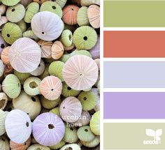 urchin hues palette from Design Seeds Colour Pallette, Colour Schemes, Color Combos, Design Seeds, Color Swatches, Color Theory, My Favorite Color, House Colors, Rainbow Colors
