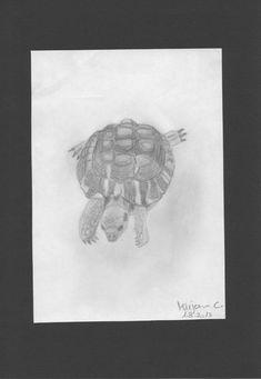 Turtle - Pencil drawing / Schildkröte - Bleistiftzeichnung / Tartaruga - Disegno a matita #animals #tartaruga #turtle #schildkröte #art #pencildrawing #drawing #zeichnung #disegno Der Computer, Pencil Drawings, Vintage World Maps, Animals, Tortoise Turtle, Children Drawing, Photo Illustration, Animales, Animaux