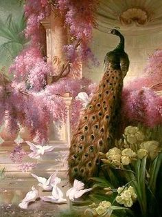 ❥ peacock and pinkness