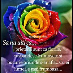 Imagini buni dimineata si o zi frumoasa pentru tine! - BunaDimineataImagini.ro Rose, Plants, Pink, Plant, Roses, Planets