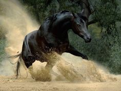 Wojtek Kwiatkowski est un photographe polonais qui aime passionnément les chevaux pur-sang Arabes, et tente, dans ses photographies, de capturer leur beauté et leur âme.