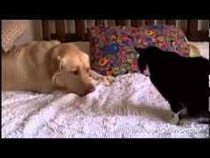 C'Mon, Cats--These Dogs Just Want to Be Friends | Faith.com