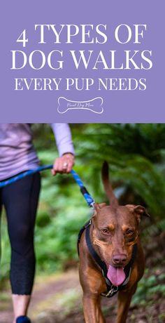 The 4 Types Of Dog Walks Every Pup Needs | Dog Health | Dog Mental Stimulation | Dog Care Tips | Dog Health Tips, Dog Health Care, Dog Hand Signals, Puppy Training Tips, Types Of Dogs, Puppy Care, Dog Care Tips, Happy Animals, New Puppy
