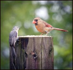 Bird Talk - A Little Piece of Me