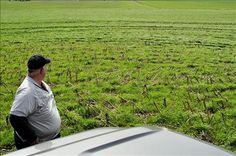 """Indiana farmer Mark Anson surveys a sea of cover crops: """"Im convinced this is the way well farm in the future, and were just trying to get there,"""" he says."""