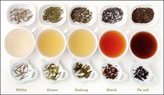 Different teas made from camillia sinensis - White, Green, Oolong, Black, Pu erh