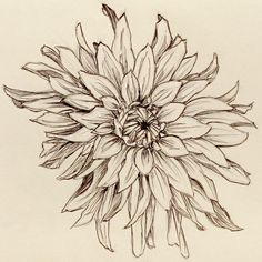flower drawings | Click on image for larger version. (I recommend it, shrinking didn\u2019t ...