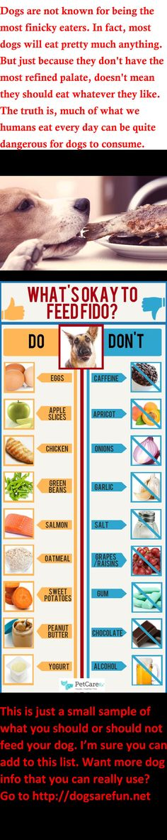 Please pay attention to what you should or should not feed your dog - it could save their life!