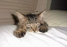 Funny pics with amazing cats (12 pics)