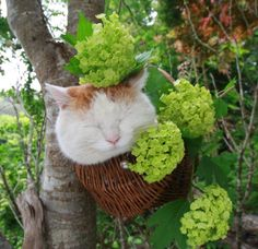 Really cute image in someone's garden @ http://blog-imgs-55-origin.fc2.com/k/a/g/kagonekoshiro/f12052508.jpg