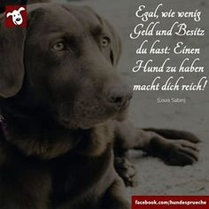Mehr Hundesprüche auf >>> www.facebook.com/hundesprueche #hund #hunde… King Charles Spaniel, Cavalier King Charles, All Dogs, I Love Dogs, Border Terrier, Dog Quotes, My Animal, Dog Friends, Beautiful Words
