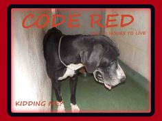 CODE RED ~ MARMA at MDAS 2 hours to LIVE!!! :(   Medical Expenses - YouCaring.com
