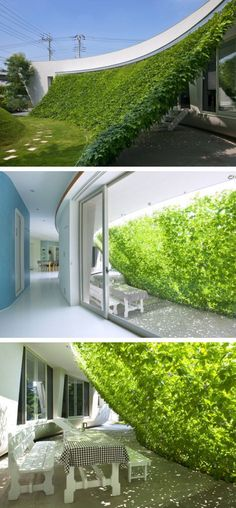 Cultivo estrutura sombra