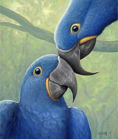 """Mug shot for Craig Buckner and his macaw, """"Bird. – A macaw named """"Bird"""" is an instant Exotic Birds, Colorful Birds, Pretty Birds, Love Birds, Beautiful Creatures, Animals Beautiful, Most Beautiful Birds, Beautiful Wall, Motifs Organiques"""