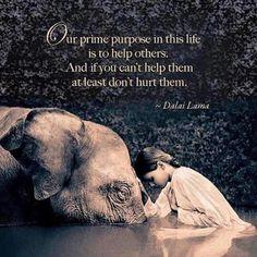 Dalai Lama quote #life #purpose