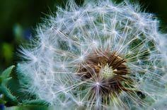 New free stock photo of light nature flowers - Stock Photo