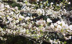 奈良を歩く2 天空の里冬野~尾曽・・・花吹雪の中でご機嫌ハイク - けせらせら ~日の照子のひとりごと~