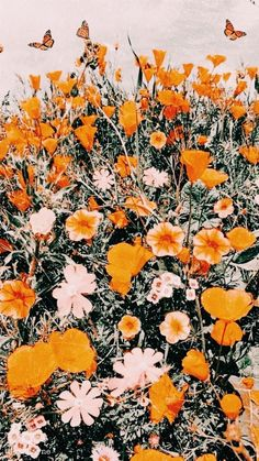 Collage Des Photos, Photo Wall Collage, Picture Collages, Collage Pictures, Hanging Pictures, Orange Aesthetic, Flower Aesthetic, Aesthetic Vintage, Iphone Background Wallpaper
