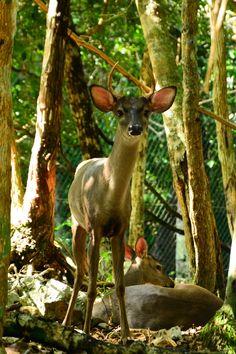 Disponga y venga a visitar el parque natural Aktun Chen! El parque Aktun Chen es uno de los muchos parques naturales en México, se encuentra cerca de la ciudad de Cancún, en la Riviera Maya, en el Estado de Quintana Roo. La temática del parque es de protección y conservación del medio ambiente, las diferentes especies de fauna y flora y la conservación de la armonía de la naturaleza. #naturaleza #aktunchen #mexico #rivieramaya