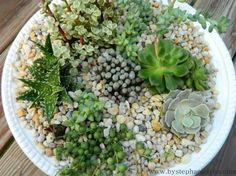 Pretty succulent plants