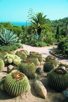 Cactus al jardí botànic Pinya de la Rosa, entre Blanes i Lloret, Catalonia