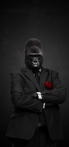 Gorilla Men's Fashion. #Monkey Business