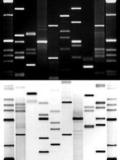 Order your own DNA Portrait, Kiss Portrait or Fingerprint Art on Canvas.