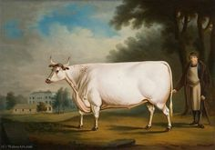 The Nannau ox painted with the family's cowman, Sion Dafydd, by Daniel Clowes of Chester. The ox was one of the last of an ancient herd of white cattle at Nannau. Your Paintings, Animal Paintings, National Museum Of Wales, Daniel Clowes, Fine Art Prints, Canvas Prints, Inspirational Artwork, Art Uk, Naive Art