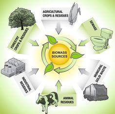 Biomass Resources