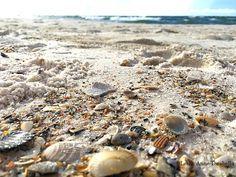 The Gulf Shores & Orange Beach project - Leslie Anne Tarabella Gulf Coast Beaches, Orange Beach Alabama, Seashells, Beautiful Beaches, Southern, Spaces, Vacation, Blog, Snails