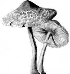 mushrooms realistic draw step mushroom drawing drawings pencil sketches shading catlucker dragoart