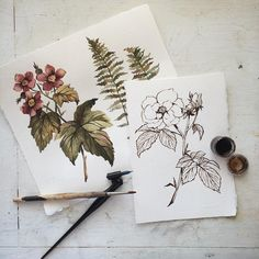 floral ink illustration and water color #classic #vintage