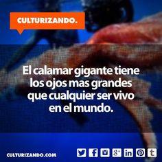 #Curiosidades #DatoCurioso #SabíasQue #Educación #Cultura #FotoDelDía #Culturizando