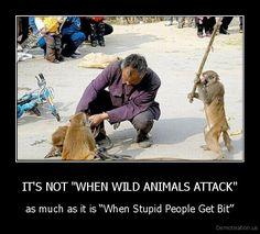 """IT'S NOT """"WHEN WILD ANIMALS ATTACK"""""""
