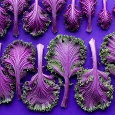 Dégradés de Fruits et Légumes par Brittany Wright