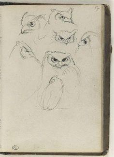 Heads of Owls / Têtes de hiboux - 1820 Eugène Delacroix Paris, musée du Louvre, D.A.G.