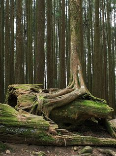 Roots over fallen tree. Photography by Bryan Hsieh