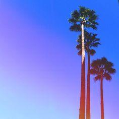 Palm tree life. www.sabrinascloset.com