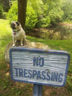 Or else I'll sick my pug on you...he might kiss you to death