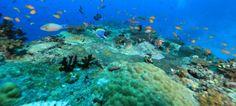 Angsana Ihuru house reef