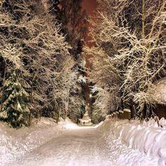 Caminho de inverno - Finland (Here under the North Star by Pajunen).
