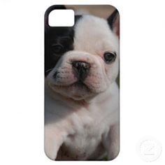 CASO IPHONE5 iPhone 5 CAPAS
