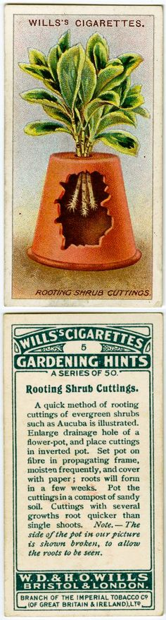 178 best Cigarette Cards images on Pinterest   Boxing, Trading cards and Vintage box