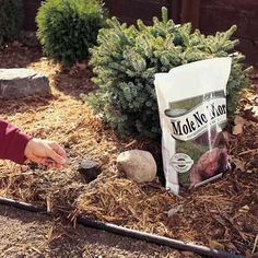 Coffee Grounds Use to rid of moles in the garden Neat thought