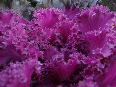 Dulce Fragancia: ¿Alimentos o medicinas? Cabbage, Vegetables, Plants, Food, Medicine, Fragrance, Food Items, Sweets, Health