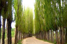 Uspallata - Las Heras - Provincia de Mendoza