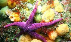 Viaje a los arrecifes de coral. Estrella de mar.