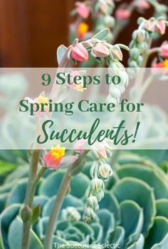 Learn how to get your succulents ready for spring! These simple steps to spring care for succulents ensures your plants are ready to grow in health and beauty as well as size! #succulentcare #springcare #careforsucculents #springsucculents Succulent Soil, Planting Succulents, Earthworms, Replant, New Growth, Echeveria, Indoor Plants, House Plants, Health And Beauty