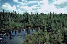 Boreal Forest - The Canadian Encyclopedia